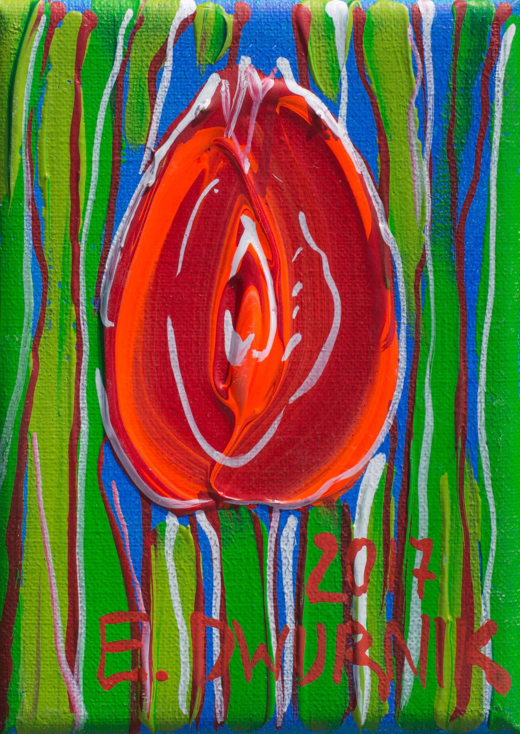 Tulipan czerwony